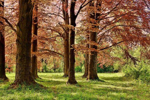 Parks in Manalapan NJ